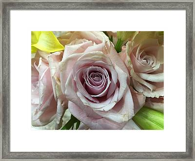 September Rose Framed Print