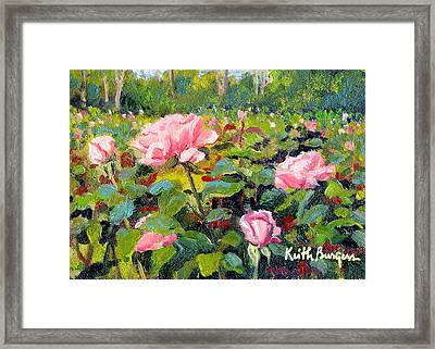 September Roses Framed Print by Keith Burgess
