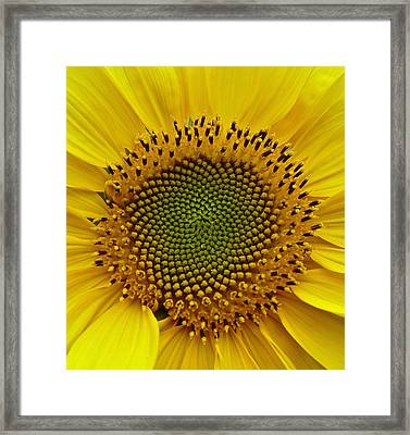 Framed Print featuring the photograph September Sunflower by Richard Cummings