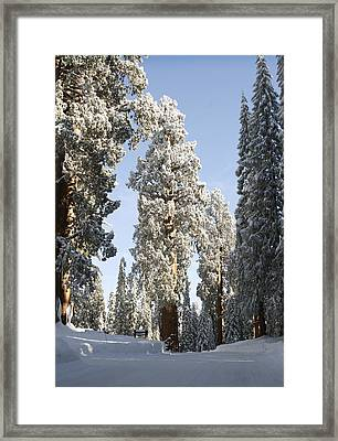 Sequoia National Park 4 Framed Print