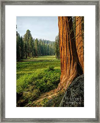 Sequoia Np Crescent Meadows Framed Print