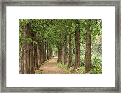 Sequoia Tunnel Framed Print