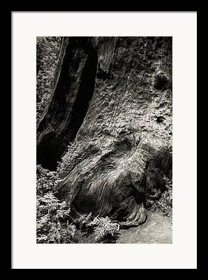 Sequoia National Park Framed Prints