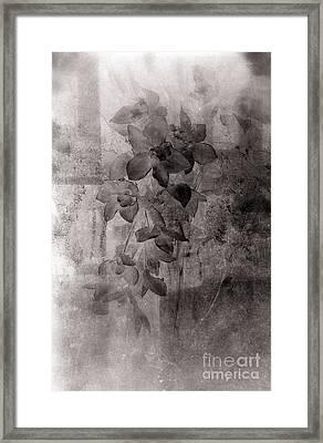 Serenade Framed Print by Susanne Van Hulst