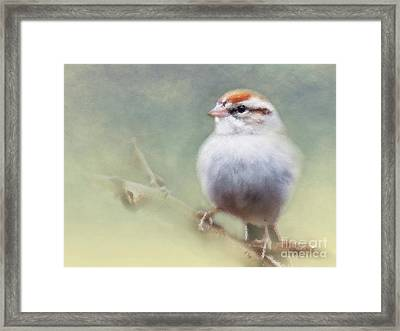 Serendipitous Sparrow  Framed Print by Anita Faye