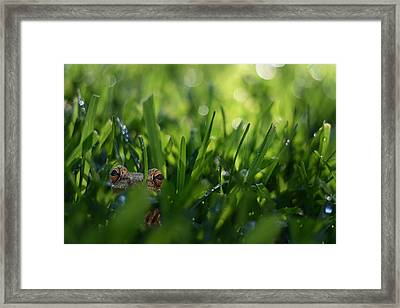 Framed Print featuring the photograph Serendipity by Laura Fasulo