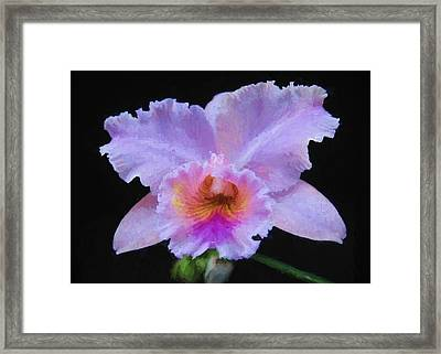 Serendipity Orchid Framed Print