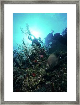Serene Gray Angelfish And Sunburst Sun Framed Print
