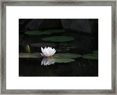 Serene In Pink Framed Print
