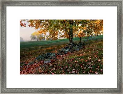 Serene Morning Framed Print by Bill Wakeley