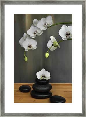 Framed Print featuring the photograph Serene Orchid by Terence Davis