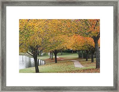 Serene Path Framed Print by David Wahome