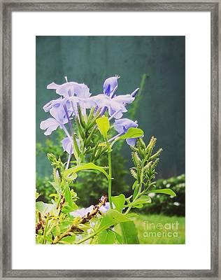 Serene Purple Framed Print