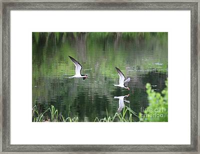 Serene Skimmers Framed Print