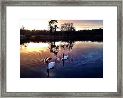 Serene Swans Framed Print
