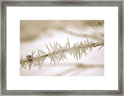 Serene Winter Frost Framed Print by Carol Groenen