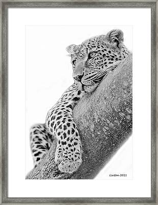 Serengeti Leopard Framed Print by Larry Linton