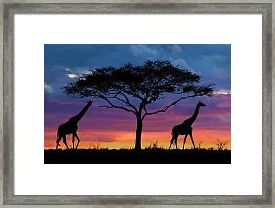 Serengeti Sunset Framed Print by Stu  Porter