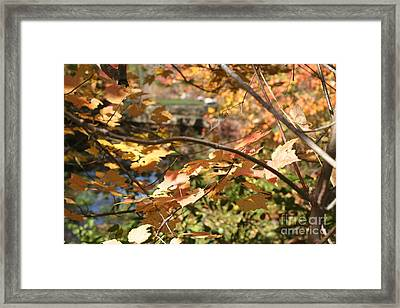 Serenity Framed Print by Amy Holmes