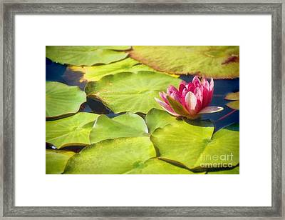 Serenity And Solitude Framed Print