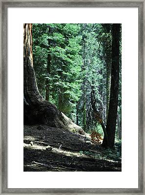 Serenity Framed Print by Brigid Nelson