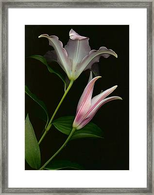 Framed Print featuring the photograph Serenity by Carol Kinkead