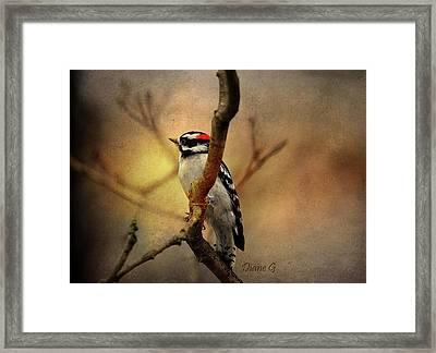 Serenity Framed Print by Diane Giurco