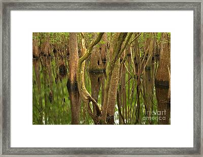 Serenity In The Cypress Framed Print by Adam Jewell