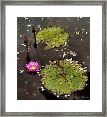 Serenity Framed Print by Joe Bonita
