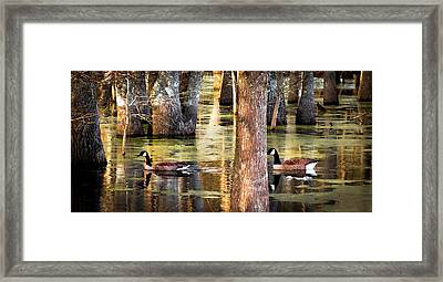 Serenity Of Cypress Framed Print by Karen Wiles