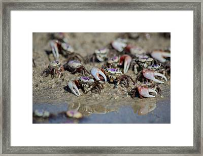 Serenity Point Fiddlers  Framed Print by Betsy Knapp