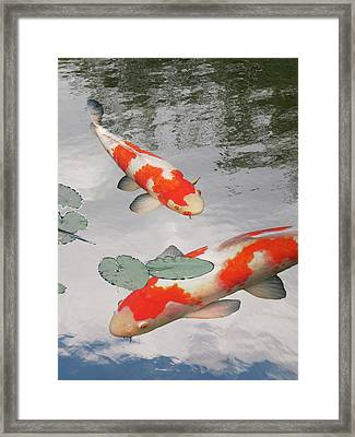 Framed Print featuring the photograph Serenity - Red And White Koi by Gill Billington