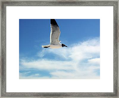 Serenity Seagull Framed Print by Marie Hicks