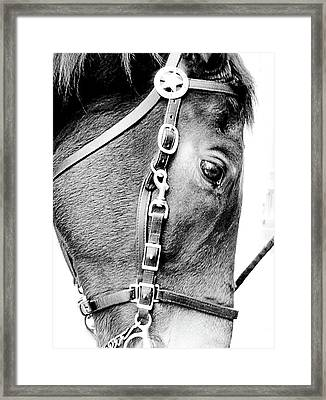 Sergeant Ed Framed Print by Jason Leonti