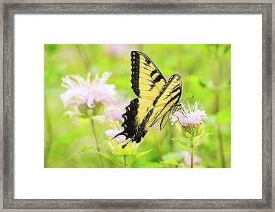 Series Of Yellow Swallowtail #4 Of 6 Framed Print by Joni Eskridge
