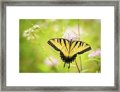 Series Of Yellow Swallowtail #6 Of 6 Framed Print