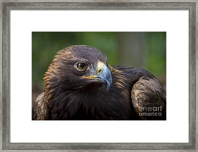 Serious Framed Print