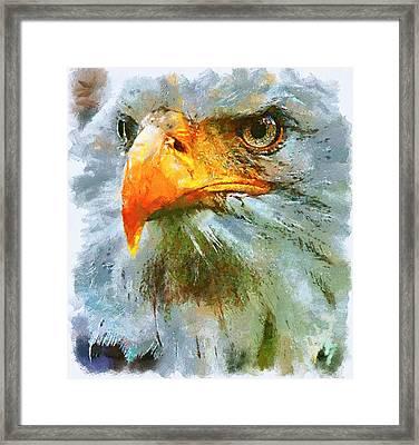 Serious Eagle Framed Print