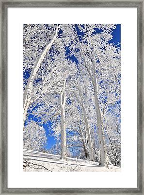 Serious Rime Frost Framed Print by Alan Lenk