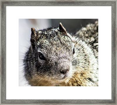 Serious Squirrel Framed Print