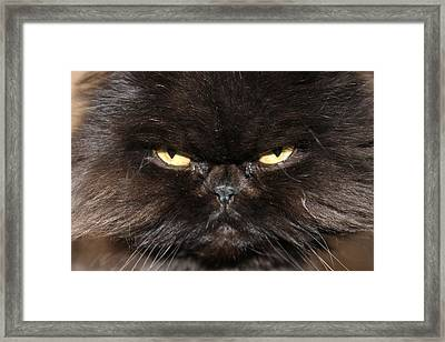 Seriously Framed Print by Angie Wingerd