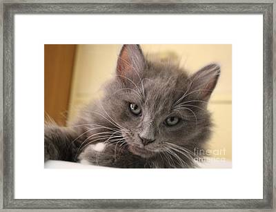 Seriously Bro Just Stop With The Photos  Framed Print by Scott D Van Osdol
