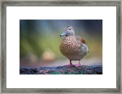Framed Print featuring the photograph Seriously Cute by Cindy Lark Hartman