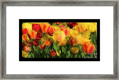 Framed Print featuring the photograph Seriously Spring - Bordered by Wendy Wilton