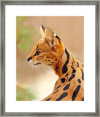Serval - Extreme Hunter Framed Print