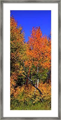 Set 54 - Image 1 Of 5 - 10 Inch W Framed Print