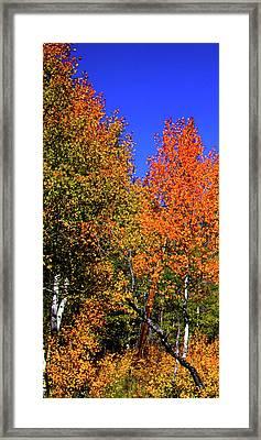 Set 54 - Image 1 Of 5 - 12 Inch W Framed Print