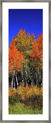 Set 54 - Image 3 Of 5 - 12 Inch W Framed Print