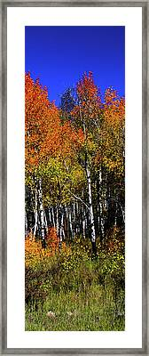 Set 54 - Image 4 Of 5 - 10 Inch W Framed Print by Shane Bechler