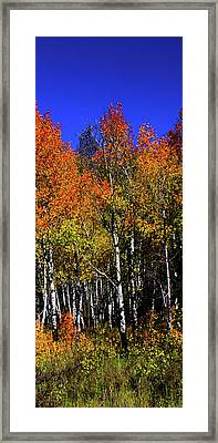 Set 54 - Image 4 Of 5 - 12 Inch W Framed Print